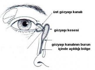 göz yaşı kanalları